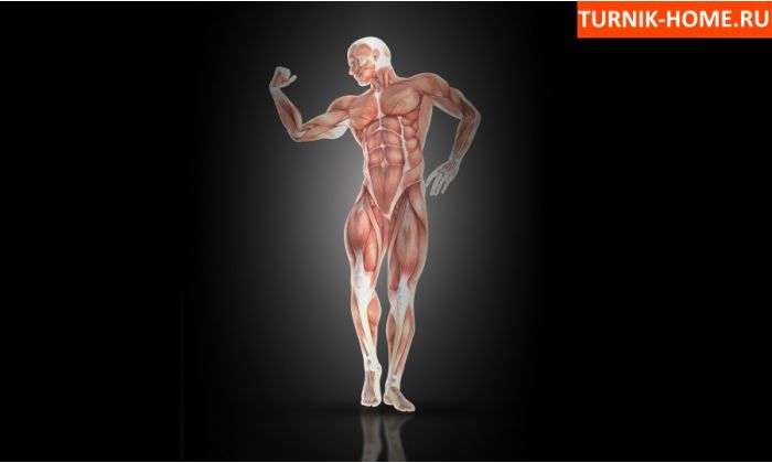 Какие мышцы качаются при занятиях на брусьях